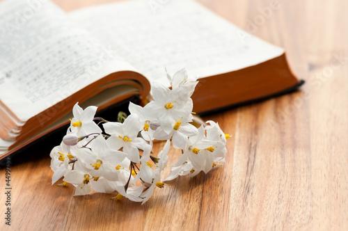 Fotografija  Aufgeschlagenes Gebetbuch mit Jasminblüten