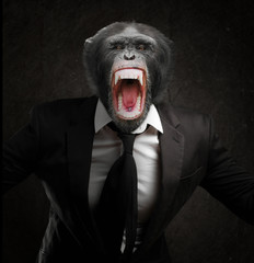 Fototapeta Frustrated Monkey In Business Suit