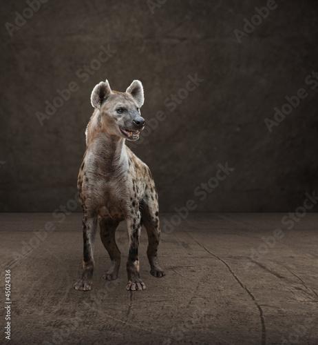 Poster Hyène Portrait Of Hyena