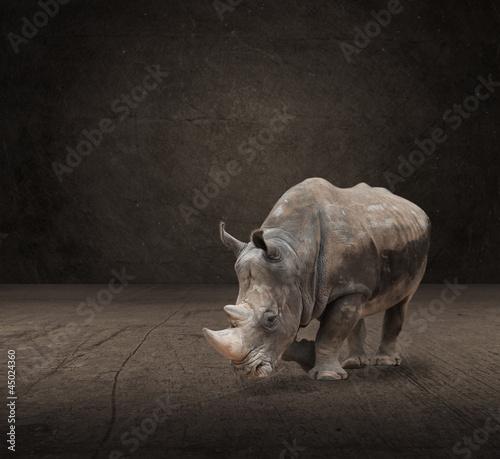 Poster Rhino Portrait Of Rhinoceros