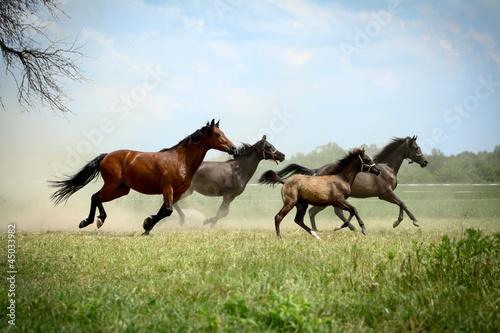 Tuinposter Paarden Rodzina w galopie 2