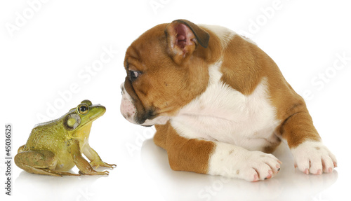 Tuinposter Kikker cute puppy with bullfrog