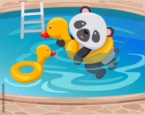Canvas Prints River, lake panda swimming with duck tube