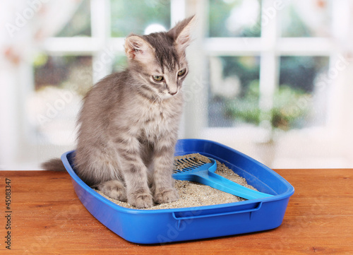 Keuken foto achterwand Kat Small gray kitten in blue plastic litter cat