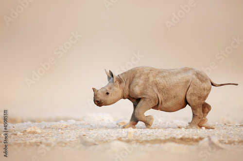 Spoed Foto op Canvas Neushoorn Black Rhinoceros baby running