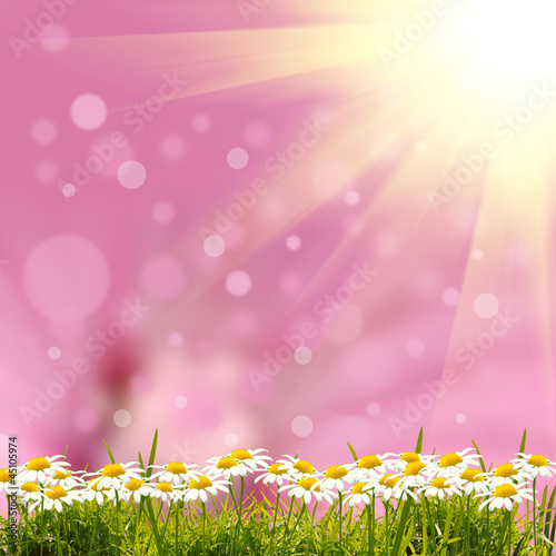 Photo Stands Candy pink green grass background