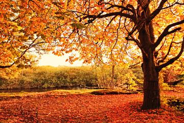 Obraz Beautiful Autumn in the park