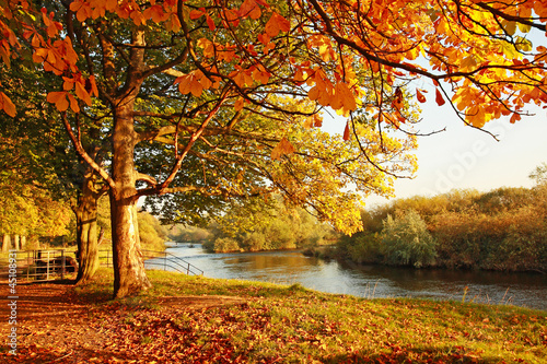Poster Bomen Beautiful Autumn in the park