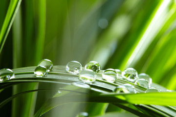 Fototapeta water drops on the green grass