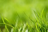 In einer Makroaufnahme. Grüne Gräser