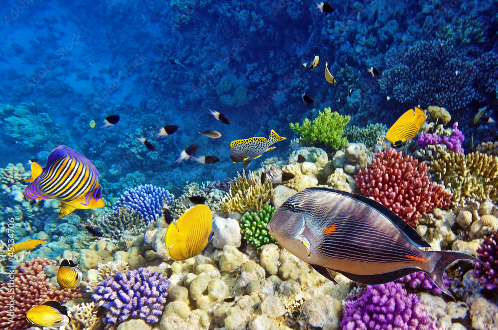 Fototapeta Coral and fish in the Red Sea.Egypt