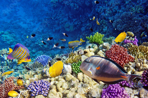 Poster Koraalriffen Coral and fish in the Red Sea.Egypt