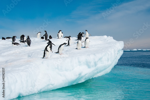 Poster Antarctic Adelie penguins jumping from iceberg