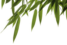 Bamboo Leaves And Stalks Isolated On White Background