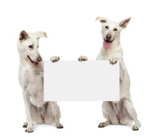 Two Crossbreed Dogs Sitting And Holding White Sign