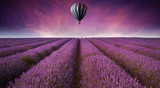 Fototapeta Lavender - Stunning lavender field landscape Summer sunset with hot air bal