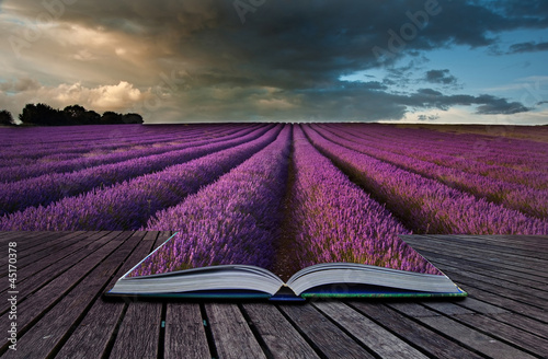 Printed kitchen splashbacks Eggplant Creative concept image of lavender landscape in pages of book