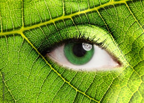 oko-liscia