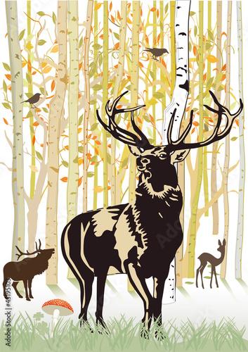 rogacz-i-rogacz-w-jesien-lesie