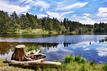 Tree Stump By A Lake