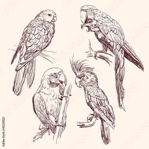 Canvas Prints Owls cartoon Parrot collection vector llustration