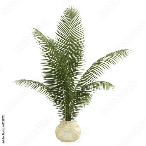 Areca palm houseplant Canvas Print