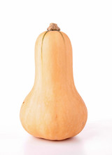 Isolated Butternut Squash