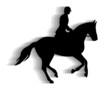 Pferdesport - 8