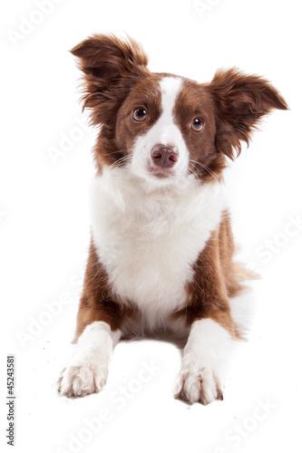 Fototapeta Hund im Platz obraz na płótnie