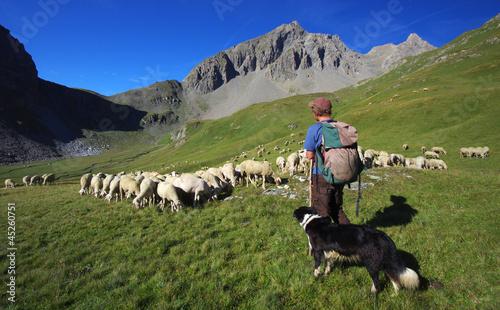 Stampa su Tela vie d'alpage - berger et son troupeau de moutons