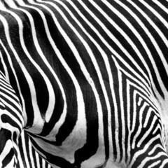 Zebra Geography