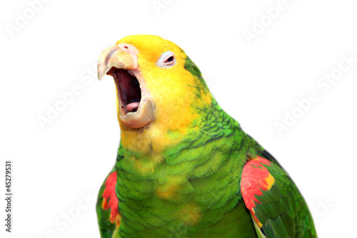 Photo Yellow head Amazon (Amazona oratrix), isolated on white