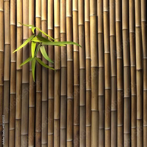 bambus-sciana