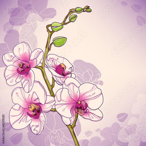 wektorowa-galaz-orchidee