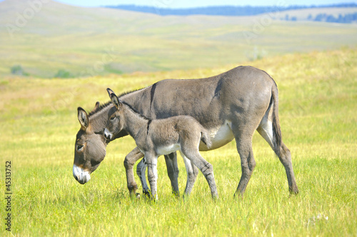 Fotobehang Ezel Mother and Baby Burro