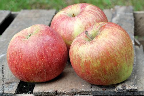 Naklejka premium jabłka na skrzyncej
