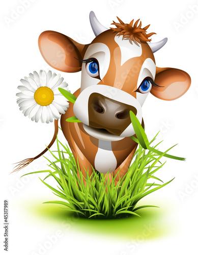 dzersejowa-krowa-w-trawie