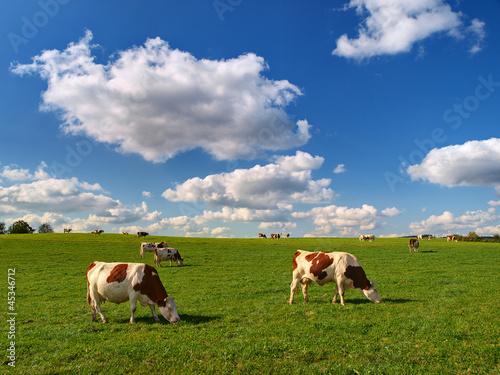 Poster de jardin Vache VACHES AU PRE