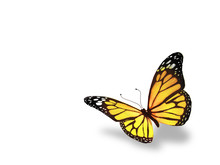 Yellow Butterfly, Isolated On ...