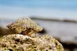 Sea snail on the beach