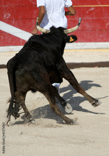 Corrida toro