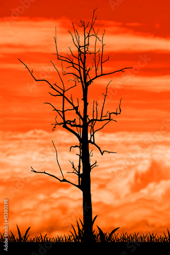silhouette dead tree with a surreal scary red and orange sky