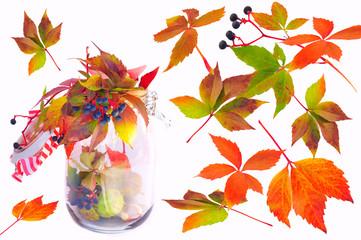 Herbstlaub isoliert