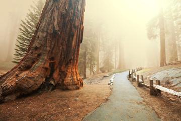 Šuma Sequoia
