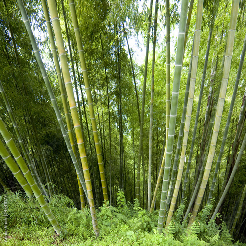 Poster Bamboe Background in bamboo