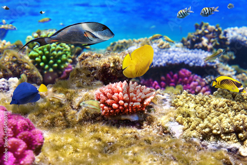 Foto op Aluminium Onder water Coral and fish in the Red Sea.Egypt