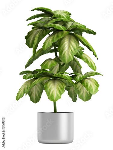 Fototapeta Fresh branchy home plant obraz na płótnie
