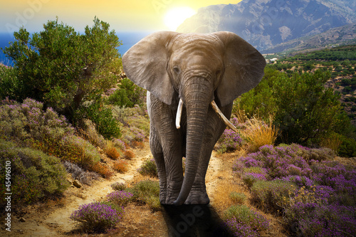 Deurstickers Afrika Elephant walking on the road at sunset