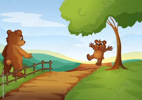 Wall Murals Bears Bears