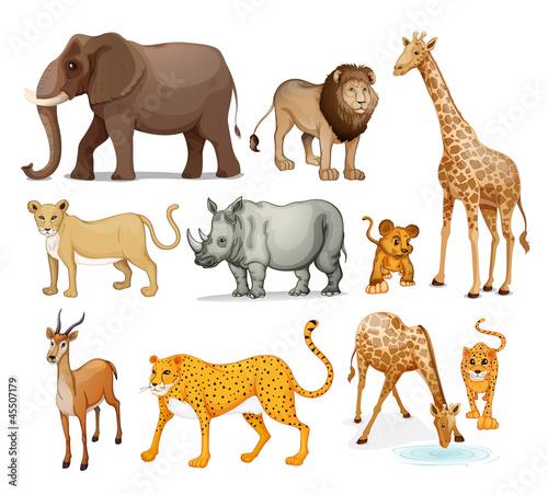 Naklejka ścienna Ilustracyjne zwierzęta na białym tle